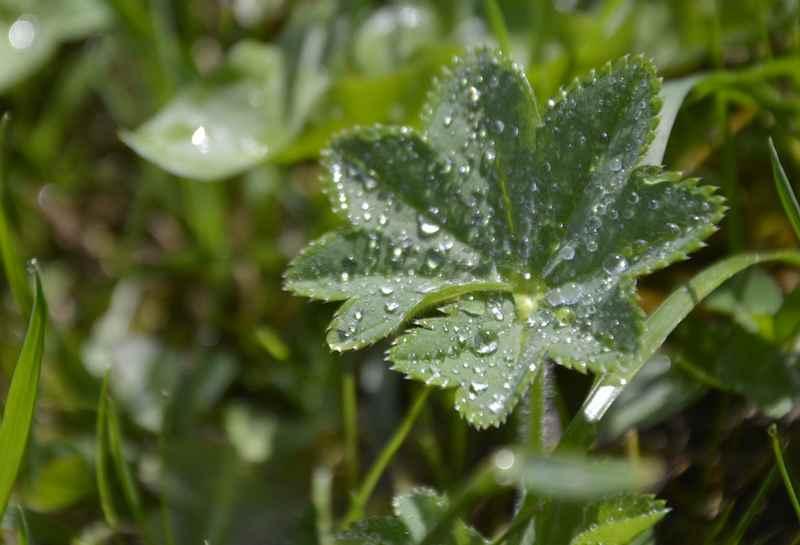 Die Natur spüren auf der Karwendeltour: In der Früh den Morgentau auf den Pflanzen beobachten und den Alltag vergessen