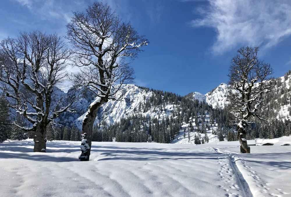 So schön ist die Winterlandschaft bei der Rohntalalm mit den verschneiten Ahornbäumen