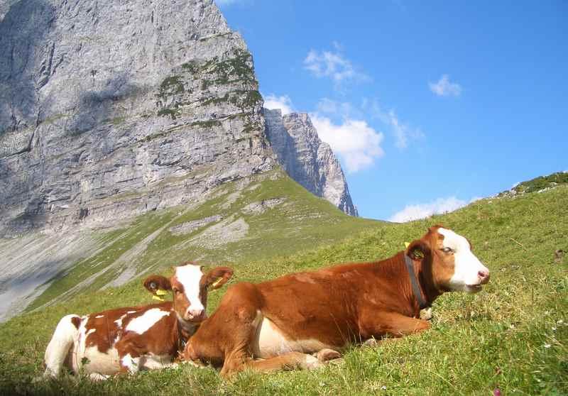 Vom Ahornboden über das Hohljoch zur Falkenhütte oder der Lalidereralm wandern
