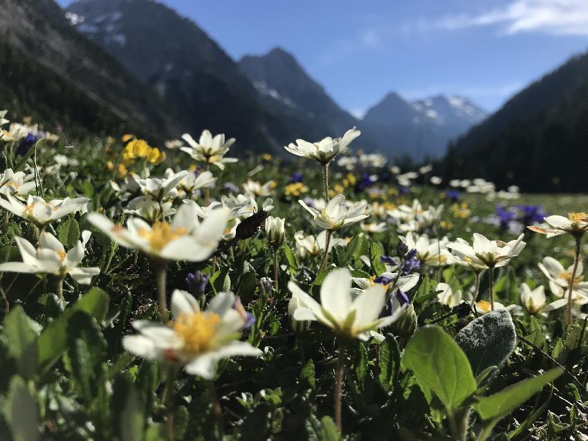 Vom Karwendelhaus zum kleinen Ahornboden und der Falkenhütte wandern