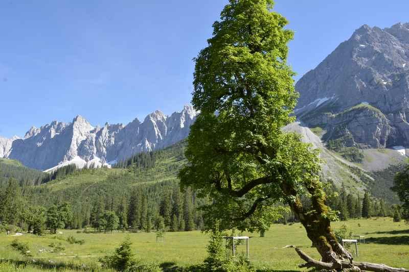 Kleiner Ahornboden im Karwendel mit Bergahorn