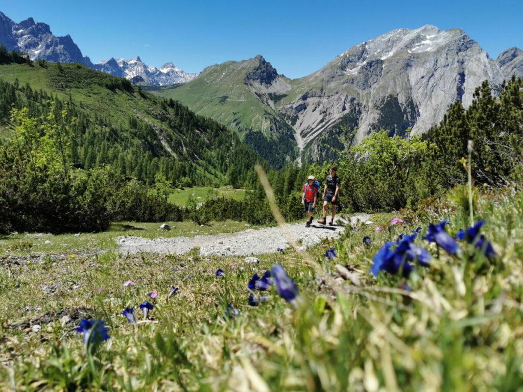 Ahornboden Wanderung Richtung Lamsenjoch - entlang der Enzianwiesen im Karwendel wandern