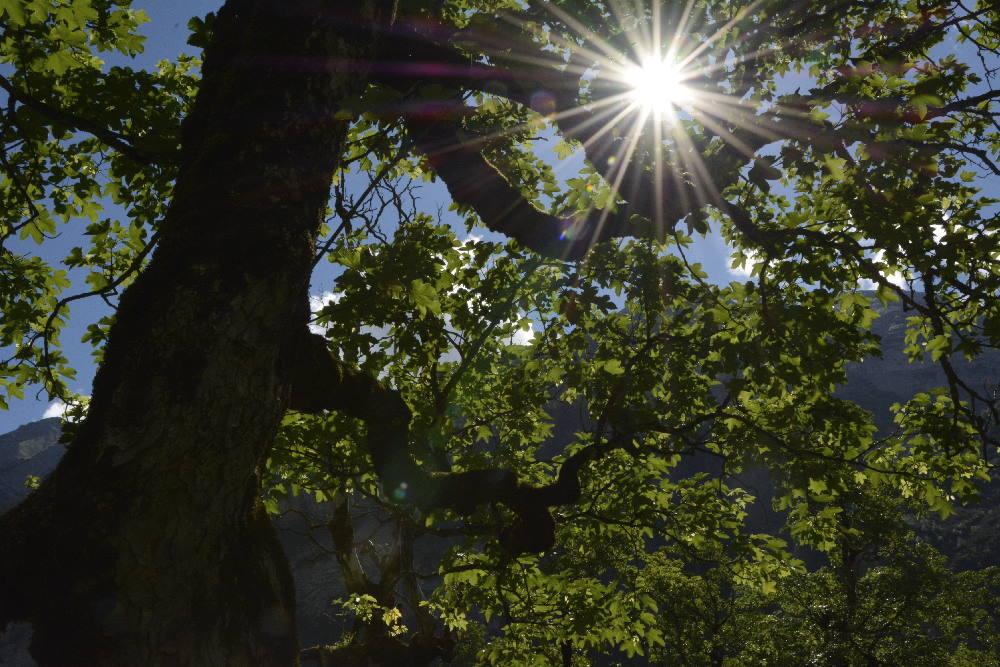 Die Magie der Bäume am Ahornboden, wenn die Sonne durch die Blätter strahlt