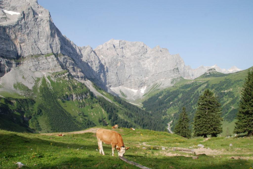 Auf die Binsalm wandern - und die Kühe auf der Alm beobachten