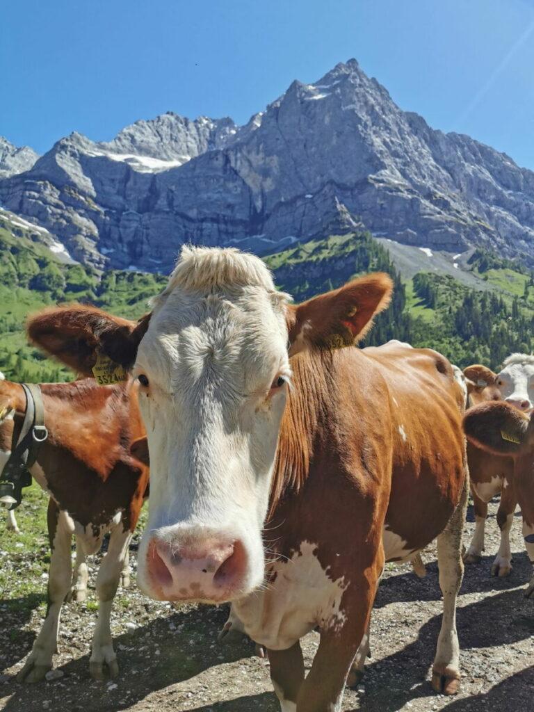 Die Eng - das ist viel tolle Landschaft und die Kühe mit den Bergspitzen des Karwendelgebirge