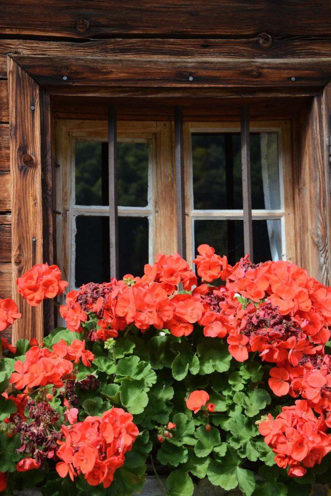 Rustikal und mit viel Blumenschmuck die Hütten der Alm