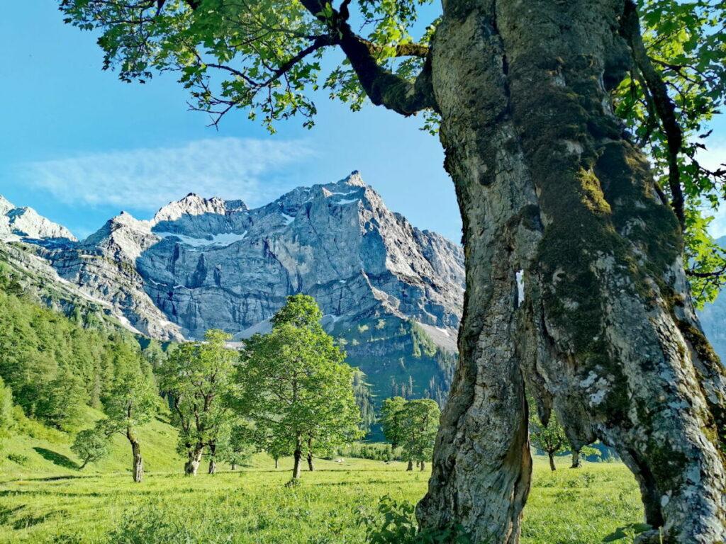 Die Eng - der alpine Traum mit uralten Ahornbäumen und den imposanten Felswänden des Karwendel