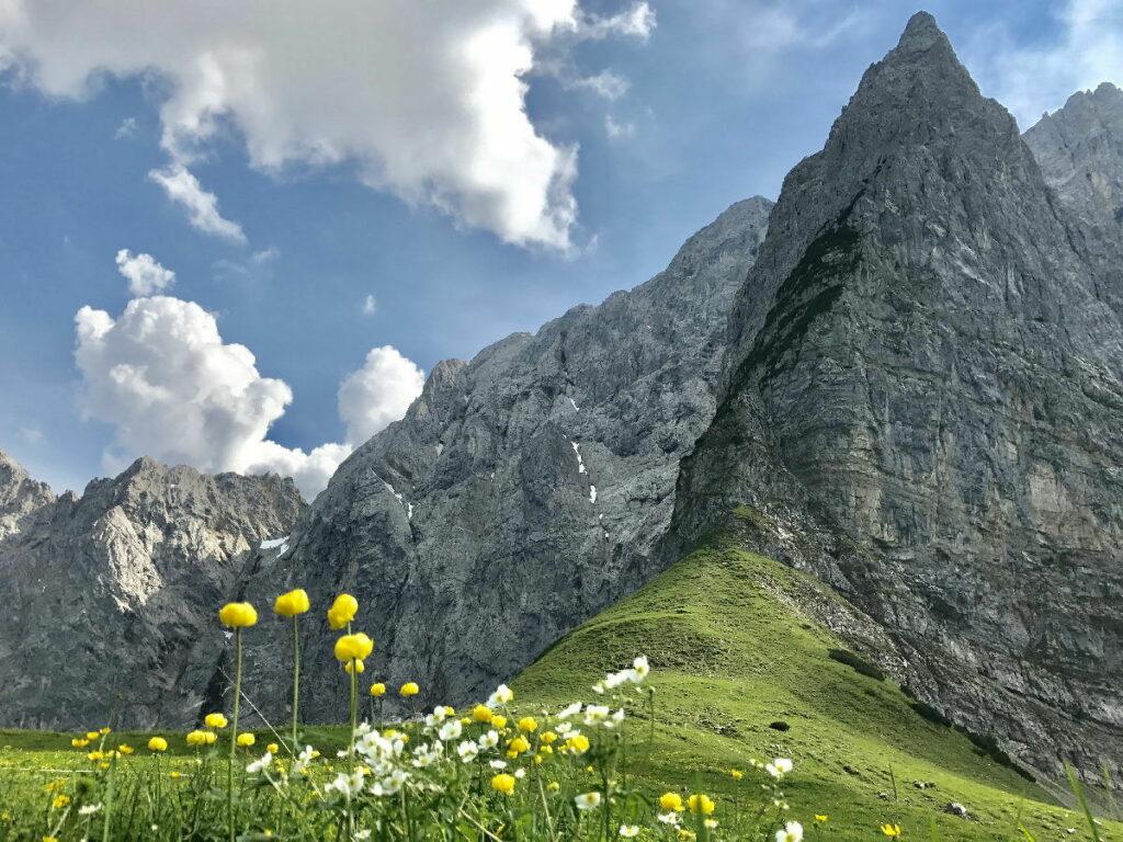 Von der Eng rauf zum Hohljoch - ein Traum im Frühling zur Blüte der gelben Trollblumen