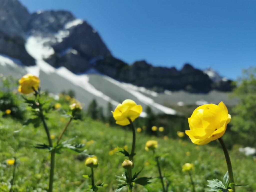 Entdecke die bunten Blumenwiesen im Frühsommer am Lamsenjoch