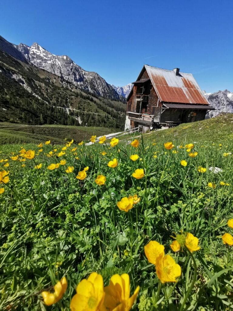 Einmalig schön mit den Blumen im Mai und Juni: Die Plumsjochhütte