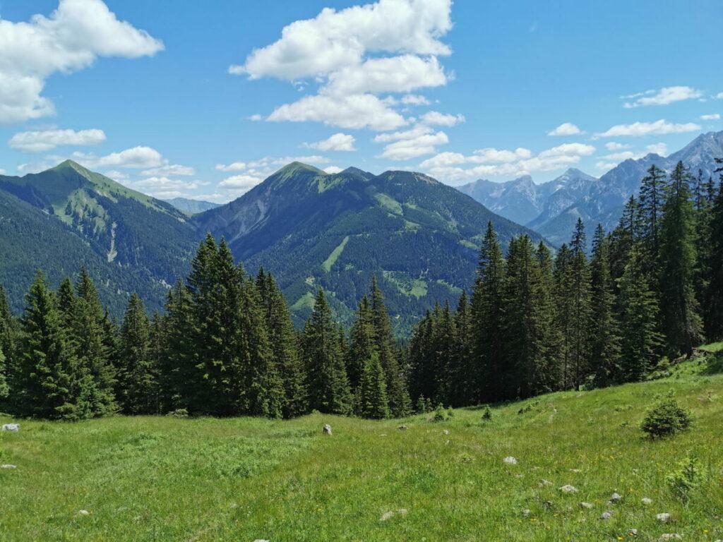 Die Alm zwischen dem Wald und dem Vorderskopf Gipfel - im Hochsommer sind Kühe hier oben