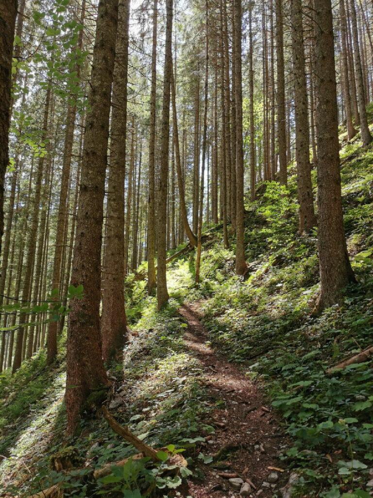 Auf den Vorderskopf wandern - und den Schatten im Wald genießen