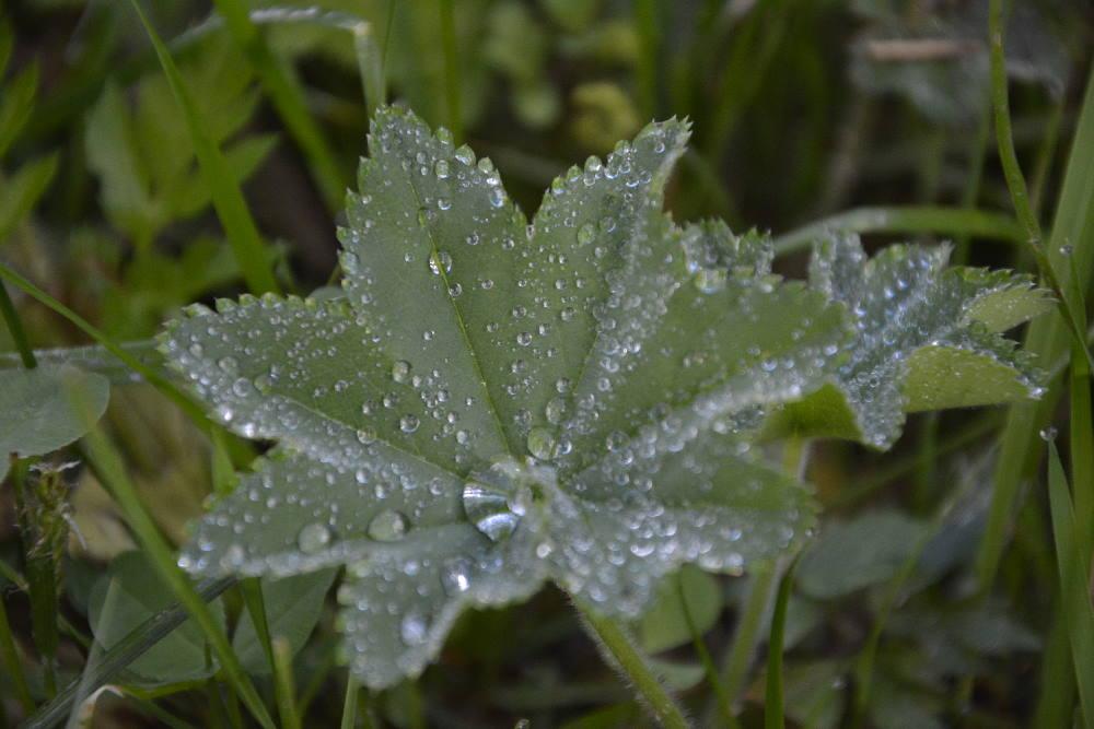 Schlechtes Ahornboden Wetter: Was tun bei Regen?